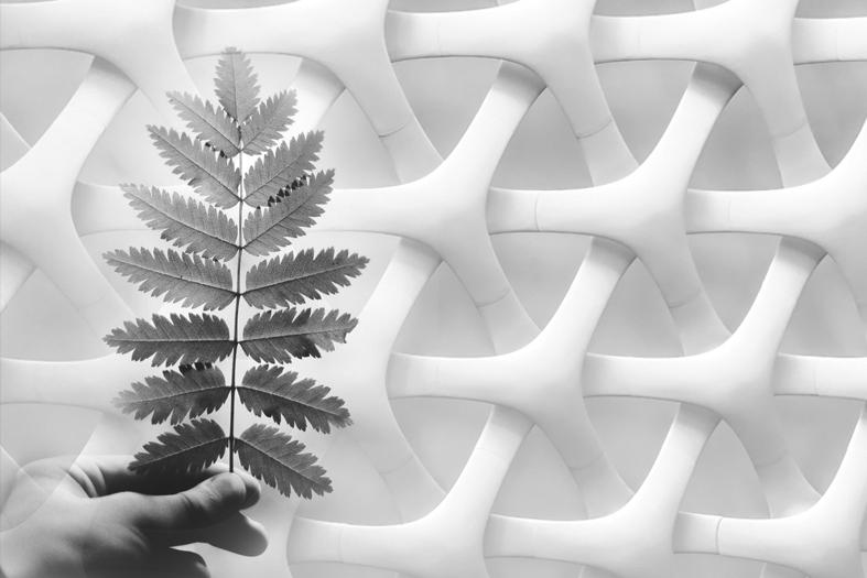 Roadmap 2050 Biobasierter Kunststoff ? Kunststoff aus nachwachsenden Rohstoffen